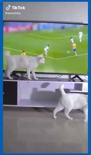 Cat trips people with his powers