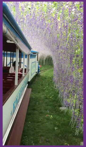 The train ride in a tunnel of flowers